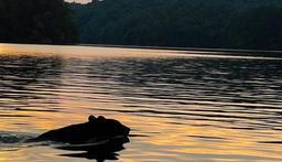 Philpott Lake is a local asset